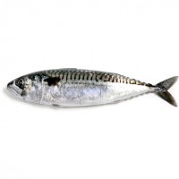 Mackerel Fish Norway 400-600gr 1kg